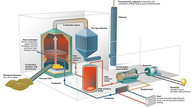 organic material are used to generate biomass energy